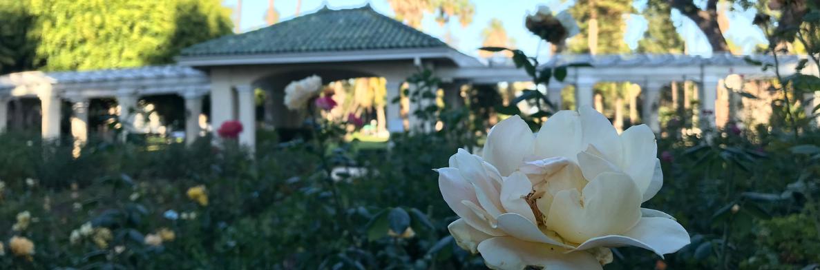Pasadena Rose Garden